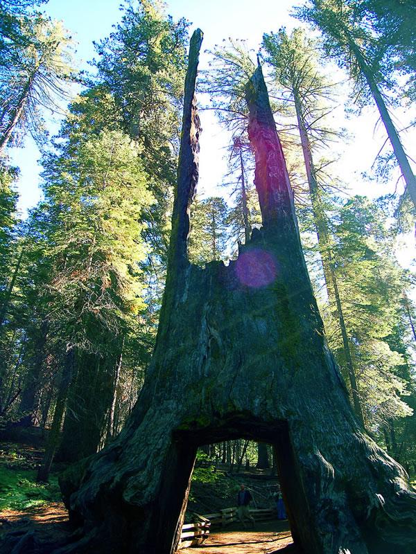 Assez Giant Sequoia Park - Les géants millénaires DC17