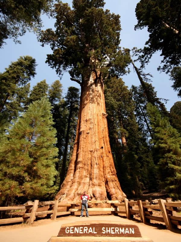 Très Giant Sequoia Park - Les géants millénaires OU15