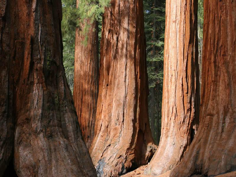 sequoia-park