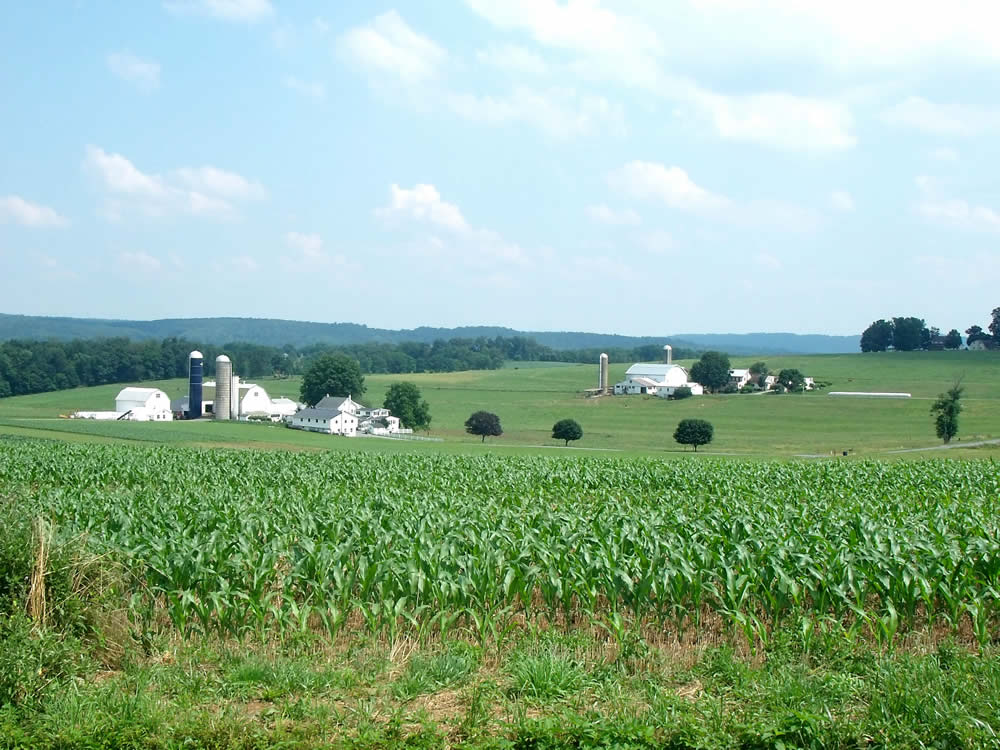 Les Amish : Une ferme