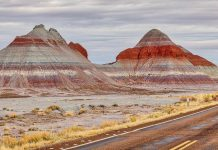 Petrified Forest National Park et Painted Desert