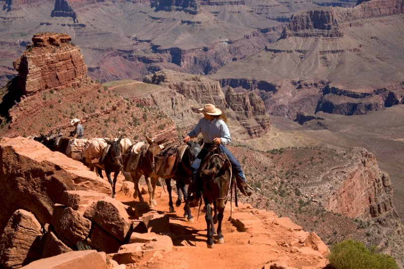 balades a cheval grand canyon